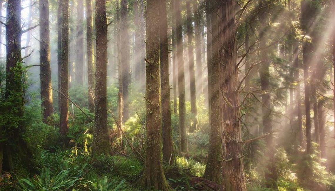 Rays Of Light - Cascade Head Preserve Area - Oregon Coast
